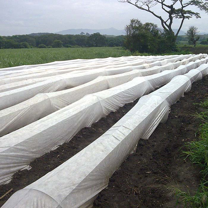 Does PP non woven fabric used in agriculture need anti-aging?